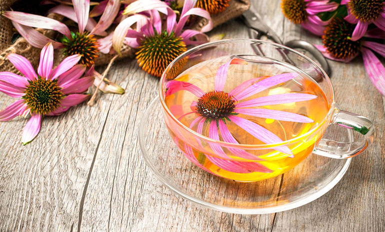natural antibiotics echinacea