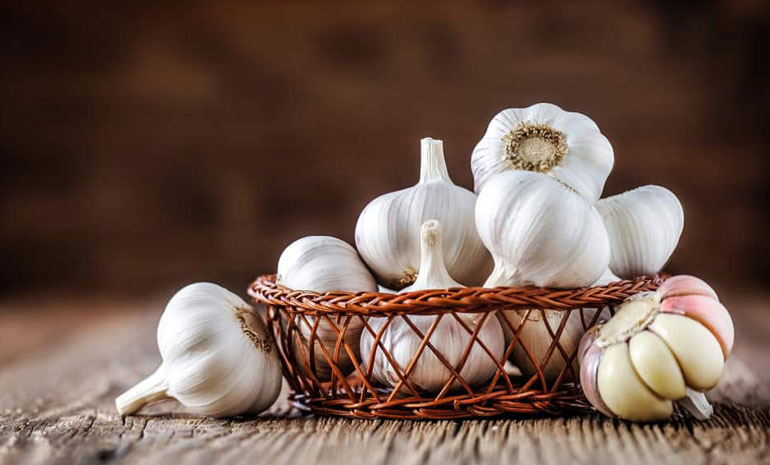 natural antibiotics garlic